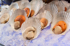 Scallops on ice Stock Images
