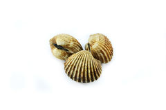 3 Scallops Stock Photography