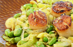 Scallops with leek and edamame Stock Images
