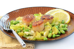 Scallops with leek and edamame. Fresh grilled sea scallops with sauteed leek and edamame Stock Photo