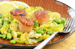 Scallops with leek and edamame. Fresh grilled sea scallops with sauteed leek and edamame Royalty Free Stock Images