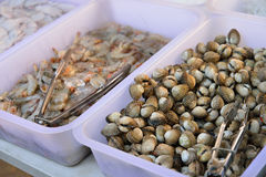 Scallops. In the local market Stock Image