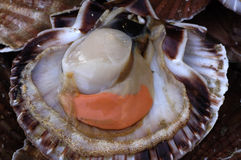 Scallops at the market Stock Photo