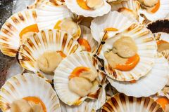 Free Scallops On Ice At The Fish Market, Background Stock Photos - 159310823