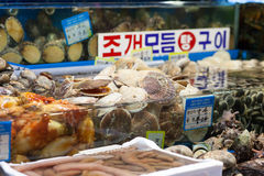 Scallops and other shells at fish market Stock Photos