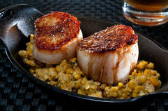 Scallops over fresh corn Stock Photography