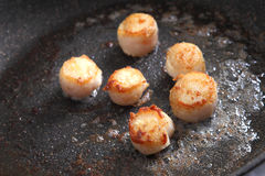 Scallops in pan Royalty Free Stock Photography