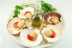 Scallops on a platter Royalty Free Stock Photos