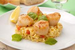 Scallops Risotto Stock Images