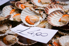 Scallops for sale at the Rialto market in Venice Stock Photos