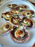 Scallops. Galicia, Spain Stock Images