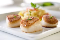 Scallops Stock Photos