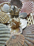 Scallops and seashells ornaments Royalty Free Stock Photos