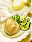 Scallops served in a scallop shell with zucchini Royalty Free Stock Images