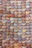 Scallops shell background Stock Image