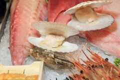 Scallops in the shell Stock Photography