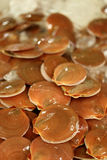 Scallops in shell for sale at a fresh seafood market Stock Photo