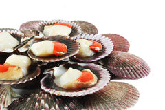 Scallops in shells Royalty Free Stock Image
