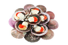 Scallops in shells Royalty Free Stock Photo