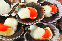 Scallops in shells Royalty Free Stock Photos