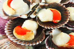 Scallops in shells Royalty Free Stock Photography