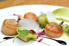 Scallops. Shells that are unique in taste Royalty Free Stock Photo
