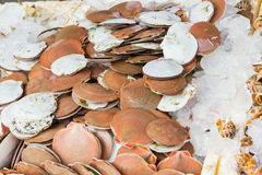 Scallops sold in the market. Stock Photo