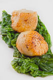 Scallops with spinach on a plate. Scallops with freshly prepared garden spinach Stock Photos