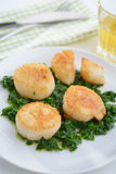 Scallops with spinach. Roasted scallops with spinach on a plate stock photography