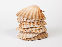 Scallops stacked Royalty Free Stock Photography