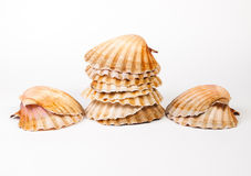 Scallops stacked and isolated on white Royalty Free Stock Photo
