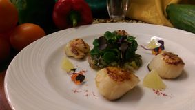 Scallops. Starter portion of Scallops Stock Images