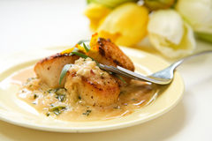 Scallops in tarragon  cream sauce Royalty Free Stock Photography