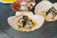Scallops topped in butter with greens on a glass plate. Cooked scallops in the shell topped in butter with greens on a glass plate on the table Royalty Free Stock Photos