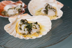 Scallops topped in butter with greens on a glass plate. Cooked scallops in the shell topped in butter with greens on a glass plate on the table Royalty Free Stock Images