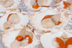 Scallops. Stock Images