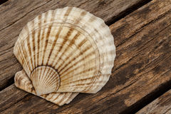 Scallops and wood textures Royalty Free Stock Photo