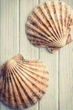 Scallops on wooden floor Royalty Free Stock Photo