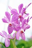 Scaly like orchids Stock Image