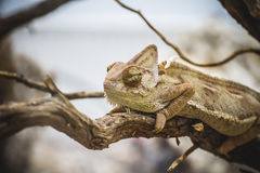 Scaly lizard skin resting in the sun Stock Photo