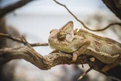 Scaly lizard skin resting in the sun Stock Photo