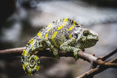 Scaly lizard skin resting in the sun Royalty Free Stock Photos