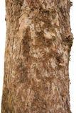 Scaly tree bark of the Platane Royalty Free Stock Photos