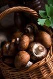 Scaly Wood Mushroom Stock Photo