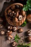 Scaly Wood Mushroom Royalty Free Stock Images