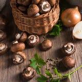 Scaly Wood Mushroom Stock Images