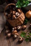 Scaly Wood Mushroom Royalty Free Stock Image