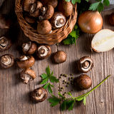 Scaly Wood Mushroom Royalty Free Stock Photos