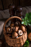 Scaly Wood Mushroom Royalty Free Stock Photography