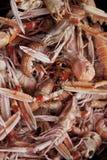 Scampi в магазине рыб Стоковое Изображение